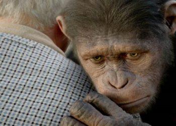 Implantes cerebrais em macacos
